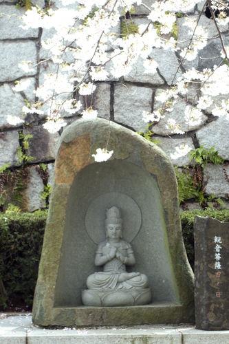 20110410sakura03.jpg