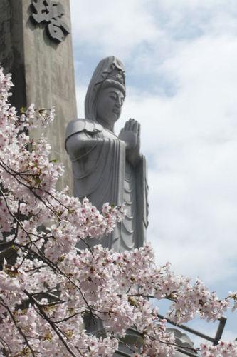 20110410sakura04.jpg